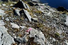 20180129-38-DOC Kea survey traps (Roger T Wong) Tags: doc frenchridge mtaspiringnationalpark np nz nationalpark newzealand sel2470z sony2470 sonya7ii sonyalpha7ii sonyfe2470mmf4zaosscarlzeissvariotessart sonyilce7m2 southisland westmatukitukivalley hike outdoors string tramp traps trek