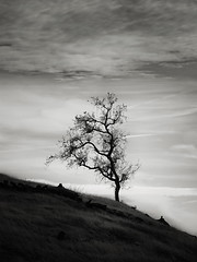 A Lanky Tree (StefanB) Tags: usa 2017 california em5 hiking josephdgrant outdoor tree treescape countypark 45200mm slope clouds