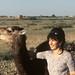 Le jeune dromadaire et la gazelle.