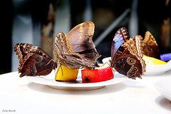 Meeting (Cristian Mauriello) Tags: food butterfly moth color blue red yellow insect bug animal nature street canon white composition