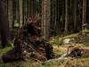Sturmschäden (Pico 69) Tags: sturm stumschäden baum wald bäume harz pico69