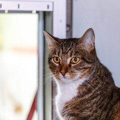 javacatscafe18Feb20180102.jpg (fredstrobel) Tags: javacafecats javacatscafe atlanta places animals ga pets cats usa georgia unitedstates us