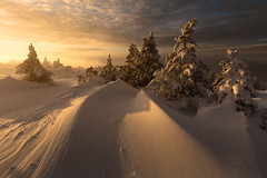 Made of Gold (DBPhotographe) Tags: ventoux vaucluse paca provence geant snow winter frost cold sunrise warm light flake pine tree france