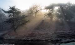 A frosty morning (Mark P Coleman) Tags: bradgatepark mist frost sunlight winter