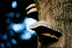 De Veluwe (Skylark92) Tags: nederland netherlands holland gelderland veluwe hoge film analogue analoge lomo forest bos