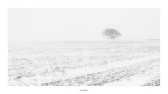 Isolation_signed_border (Jason Bradshaw Photography) Tags: winter snow minimalistic minimalism white landscapephotography landscape highkey hills heybrookbay nossmayo digitalphotography devon canon canonphotography canon400d contrast coast cliffs tree blizzard blackandwhitephotography fields