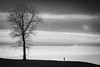 Innehalten (karo.perez73) Tags: baum winter ruhe bayern