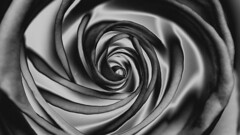 Rose pattern (Sniper1999) Tags: rose flower abstract blackwhite macroplanar carlzeiss contax 6d canon pattern silk