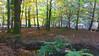 New Forest NP, Hampshire, England (east med wanderer) Tags: england hampshire uk newforestnationalpark trees oak beech woodland