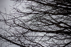 011/365 : Branches