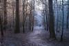 Light side and dark side (Petr Sýkora) Tags: les zima nature forest light path