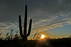 Sunset in the Desert (craigsanders429) Tags: sunsetphotography sun sunsets sunset sunandclouds sunsetcolors cactus saguarocactus sonorandesert cloudsandsky clouds tucsonarizona arizona