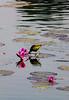 Migratory Bird in JU (Nayeemhd) Tags: bird winterbird water waterbird winterweather migratorybird