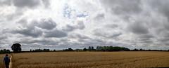 Norfolk Skies (Worthing Wanderer) Tags: norfolk summer sunny cloudy farmland ludham howhill windmill august