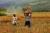 IMG_0471 (Kalina1966) Tags: bali island indonesia people rice field