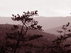 Blue Ridge Mountains - Sepia (RockN) Tags: blueridgemountains sepia august2010 bayse virginia