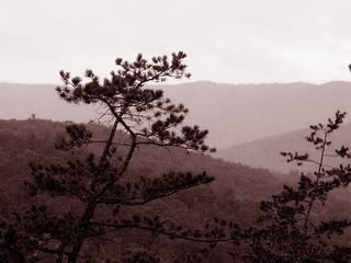 Blue Ridge Mountains - Sepia