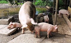 Mothers are the Best! (losy) Tags: mom kids babies pink cute nursery losyphotography pig schweinchen pigs