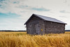 Barn House In The Middle Of The Fields (k009034) Tags: 500px autumn sky nature door clouds old building fall peaceful fields countryside crop agriculture calmness rural wooden farming no people barns finland tranquil scene scandinavia copy space oulainen teamcanon