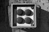 Railcar buttons (Scott Micciche) Tags: p30 paranol s filmdev:recipe=11948 ferraniap30alpha80 film:brand=ferrania film:name=ferraniap30alpha80 film:iso=80