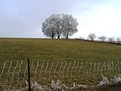 Winter bei Wichtrach (Martinus VI) Tags: raureif hoarfrost hoar rime frimas winter hivers y170102 aaretal canton de kanton bern berne berna berner bernese schweiz suisse suiza switzerland svizzera swiss martinus6 martinus6xy martinusvi martinus