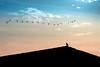 Solidão (Paulo Mauricio) Tags: indecisão adeus atébreve solidão loneliness birds adios bye nikon d750 sunset goldenhour sky