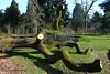 Tree stump modern statuary (jackfre 2) Tags: belgium kalmthout arboretumkalmthout treestumps naturesculpture