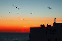 Sunset in Quarteira (Algarve, Portugal) (Placido De Cervo) Tags: algarve portugal portogallo vilamoura atlantic sea sun ocean tramonto 700d 50mm cielo spiaggia mare sunset gabbiani panorama stm cinquantino canon