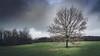 Lonely Tree (stevepe81) Tags: lonelytree landscape landschaft aasee januar germany münsterland outdoor rasen wiese sony münster4life baum tree alpha zeiss1670f4 winter 2018 lightroom green nrw münster wolken sonyalpha6300