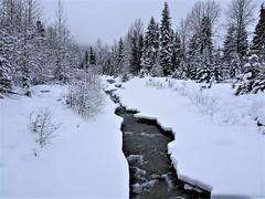 Neige <> Snow. (France-♥) Tags: 47 neige snow whistler bc canada hiver winter ruisseau nature froid cold colombiebritannique pnw tree landscape creek flickrchallengegroup flickrchallengewinner