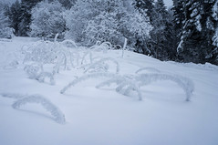 neige et givre lieu dit de Vacheresse (dimz2607) Tags: neige snow frozen givre glace ice brouillard brume hiver froid montagne
