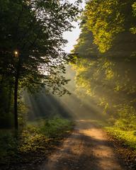 Sunset in the forest (ako_law) Tags: 2470mm 6d auwald canon canonef2470mmf4lisusm canoneos6d dawn ef2470mmf4lisusm eos6d freistaatsachsen leipzig sachsen saxony sonnenaufgang strase strasen strasenundwege sunrise weg wege deutschland de