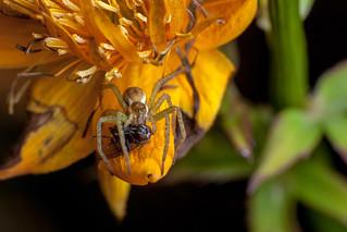 Orange Kill Zone - _TNY_2184