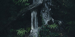 twisted tree. japan 0078 (s.alt) Tags: tree mtmisenmiyajima japantree forest wald nature natureunveiled mountmisen mtmisen japan miyajima 宮島 厳島 itsukushima shrineisland island hiroshimabay hiroshimaprefecture structure closeup japanese moos moss holz gehölz forst wood woodland elbosquelafloresta selva foresta bosco baum woodgrain crack wooden texture maserung twistedtree dendrochronology bent gnarled old twisted stressed washed lined lines decay textured chaos dark organic