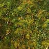 Mossy Path in Low Sun (ggppix) Tags: sungrazed bigisland hawaii rainforest tropical grass moss