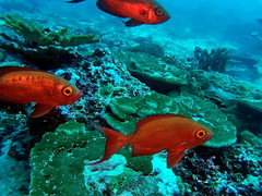 Fish (markb120) Tags: fish animal fauna water sea ocean coral reef underwater diving scuba