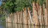 Tree wall (Balaji Photography') Tags: river backwaters kerala poovarbackwaters canon boating houseboat tourism travel placestovisit coconuttrees trreline trees fishing ecology ecobalance nature