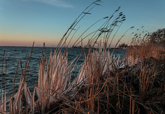 Frozen reed (Marco van Beek) Tags: frozen ice reed water seascape stone sunrise holland nature europe