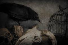 Gothic Still Life (Sh4un65_Artistry) Tags: painteffect skull textured birds sheepskull ironwork topazimpression digitalart topaz painterly digitalpainting stilllife animals gothic topaztextureeffects artwork paintedphotocrow taxidermy