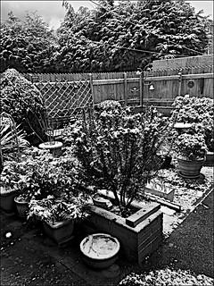 My winter garden  Black and White