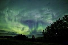 August night 2015 take 1 (John Andersen (JPAndersen images)) Tags: alberta aurora farm green night purple reflections sky trees