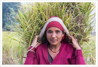 Rencontre à Ghachok, village rural du Népal
