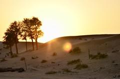 Ras Al Khaimah, January 2018 (Waldek P.) Tags: sunset rasalkhaimah desert pustynia sand piasek