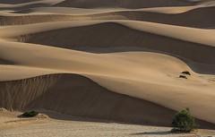 Namibia Swakopmund Dunes II (Sas & Rikske) Tags: namibia swakopmund dunes namibiaswakopmunddunes namibiaswakopmund ericbruyninckx riksketervuren afrika africa west westafrica namibië namib shiftingsands sand tree bush deblauwevogelnamibië de blauwe vogel 2017