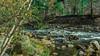 Yosemite National Park . Caifornia /USA   Merced River (Feridun F. Alkaya) Tags: yosemitenationalpark california ngc usa nature unescoheritagelist unc yosemitevalley waterfalls elcapitan halfdome geological tree sky mountain rock water forest wood river upperyosemitefalls falls fal landscape lake grass serene mercedriver merced yosemite bridalveilfall upperfall abrahamlincoln galenclark johnconness jamesmhutchings johnmuir fredericklawolmsted robertunderwoodjohnson benjaminharrison theodoreroosevelt stephenmather anseladams davidbrower stewartudall abrahamlincolngalenclarkjohnconnessjamesmhutchingsjohnmuirbenjaminharrisontheodorerooseveltstephenmatheranseladamsdavidbrowerstewartudall mariposacounty