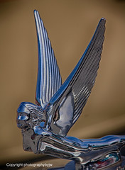 Wings Vintage Hood Ornament (Photographybyjw) Tags: wings vintage hood ornament beautiful sitting classic car found north carolina photographybyjw metal chrome design flying rural country usa