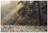 golden (derkleinebiber) Tags: nature landscape intimatelandscape conifer sunlight sunbeams sonnenstrahlen wald forest woods woodland outinthewoods forestlovers märkischeschweiz