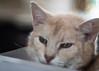 Cats and Boxes... (ursulamller900) Tags: diaplan28100 joshi cat katze karton box bokeh