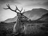 state stag glen etive (markmcneill22) Tags: glencoe scotland stag nikon wildlife wild nature explore