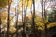Autumn leaves at the Biodome (quinet) Tags: 2017 biodome canada montreal québec 124